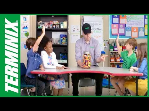 Kids and Bugs - Jelly Beans - Terminix