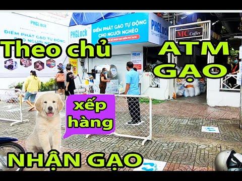 ATM Gạo, Thú Cưng Theo Chủ Xếp Hàng Nhận Gạo, cười nứt rún, Rice ATM Việt Nam. Cuộc Sống Sài Gòn.