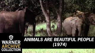 Animals Are Beautiful People (Original Theatrical Trailer)