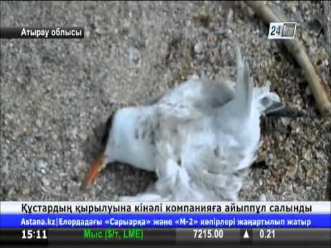 North Caspian operating company-ге 1,5 миллионнан астам теңге көлемінде айыппұл салынды