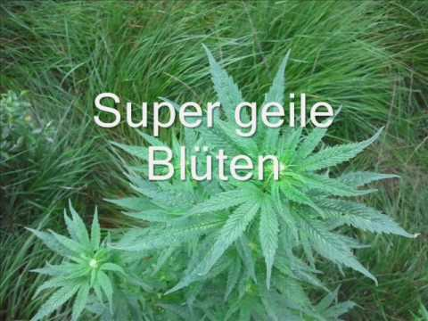 outdoor grow germany cannabis deutschland youtube. Black Bedroom Furniture Sets. Home Design Ideas