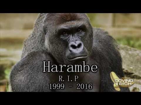 how big is a gorilla dick black midget porn