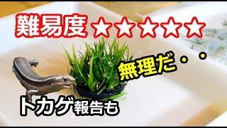 高難易度の水草 ADAのBIO水草 リトレラ・ウニフローラ 難易度 エキノド...