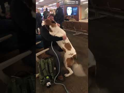Kyle Anthony - Owner Reunites With Dog at Airport