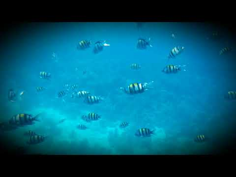 Egypt.÷Sharm el sheikh÷Submarine÷Reef÷
