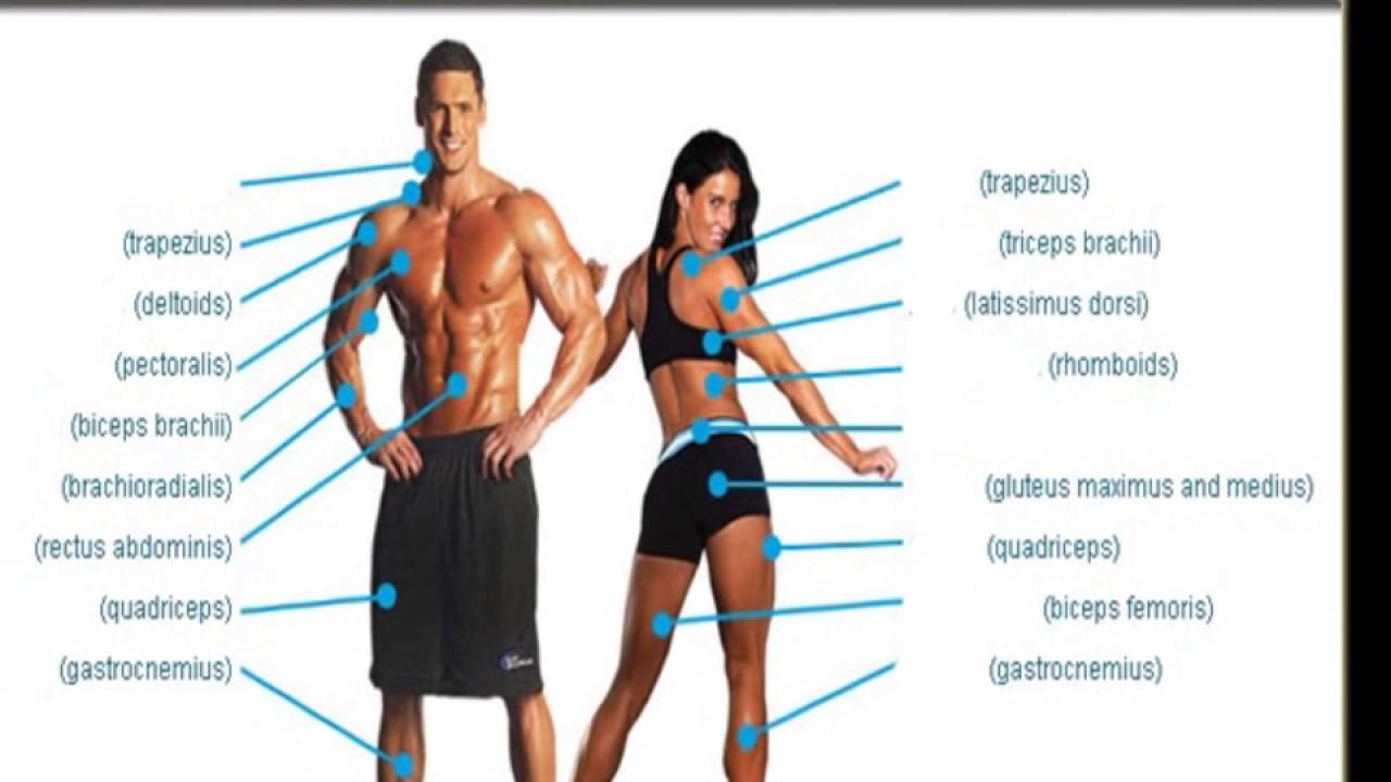 Große Muskelgruppen, Sport Übung, Trizeps, Unterarm, Oberschenkel ...