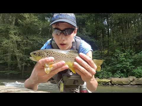 Fly Fishing Spruce Creek Pa