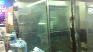 moving 750 gallon fish tank aquarium for sale on ebay this last week of july