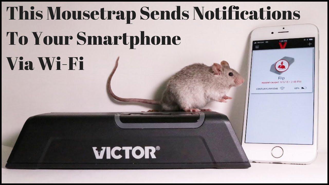 Electronic Rat Zapper Circuit
