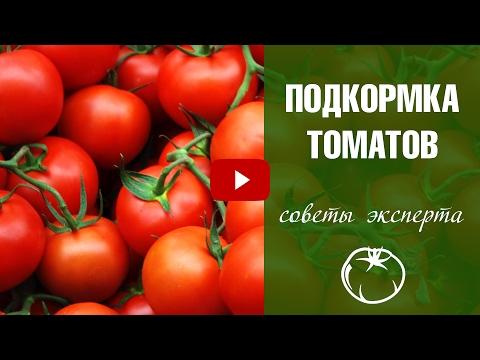 Подкормка томатов 🍅 Сроки внесения ✅ Какие подкормки использовать? Сад и огород с HitsadTV