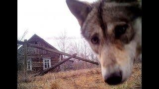 Чернобыль зона отчуждения. Лайфхаки для сталкера.
