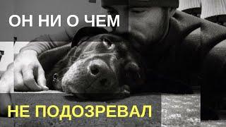 Парень гладил своего пса и ни о чем не подозревал. То, что он увидел, заставило его похолодеть…