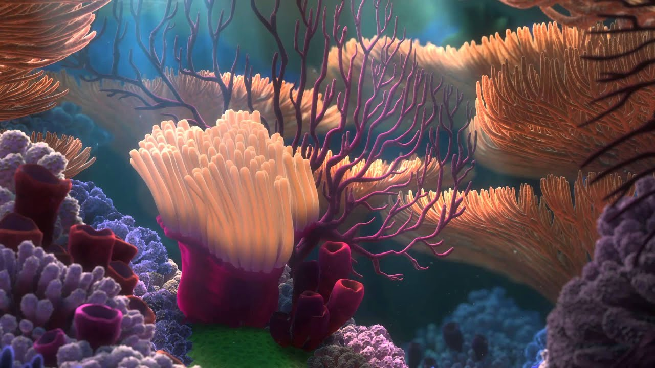 finding nemo coral reef -#main