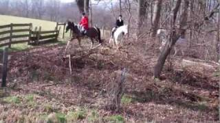 Hunting with The Cheshire Foxhounds ...