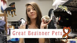 GREAT BEGINNER PETS! (and me dying)