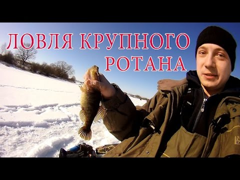 как поймать ротана на ротана зимой