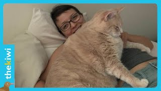 Meet the most obese cat in the world, and his amazing weight loss journey