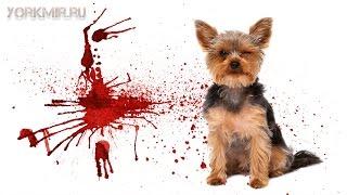Рвота с кровью у собаки | Причины | Что делать.