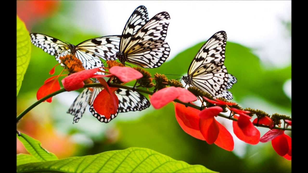 butterfly song malayalam youtube