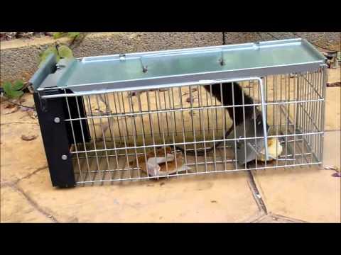 Jaula trampa multicapturas para capturar ratas ratone - Cepos para ratas ...