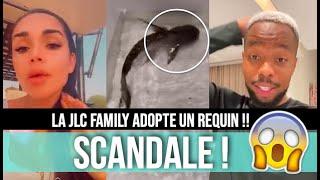 LA JLC FAMILY AU COEUR D'UNE NOUVELLE POLÉMIQUE : SISIK OFFRE UN REQUIN À JAZZ ET LAURENT !!!