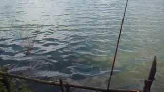 pesca de carpa na represa billings