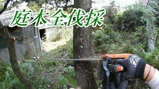 チェーンソーで民家の庭木全伐採(目線カメラ)