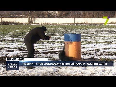 Новости 7 канал Одесса: Побили та повісили собаку: в поліції Одеси почали розслідування