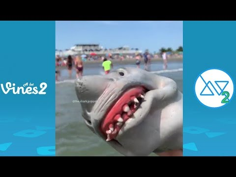Funny Shark Puppet Instagram Videos Compilation 2019 | Best Shark Puppet videos (W/Tittles)