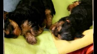 Diabetes in dogs | you can improve your dog health | diabetes in dogs is a common dog illnesses