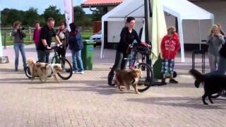 RC Dog Challenge: Steppen demo (Q en F) Thumbnail
