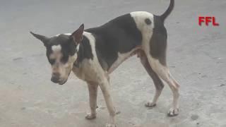 STREET DOG IN THE VILLAGE