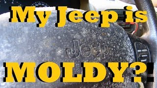 Can a moldy vehicle be saved?