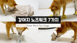 nosework for dogs at home