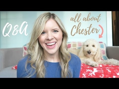 All About My Goldendoodle, Chester!