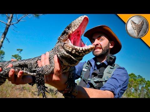 Reptilian Invaders in Florida!