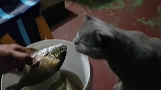 Shinobi smells something fishy