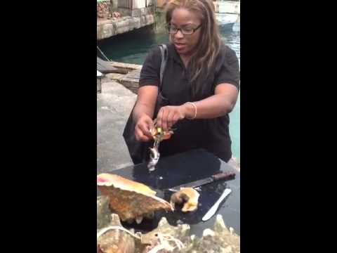 Bahamas Food Tour