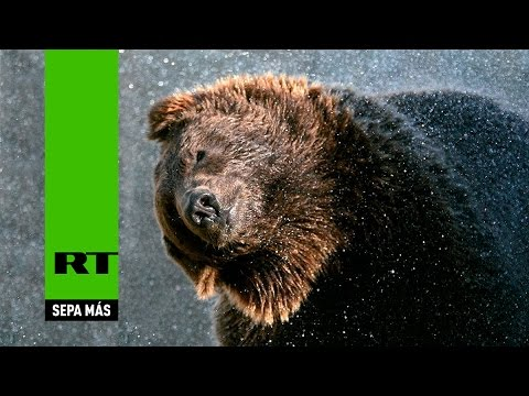 Catástrofe en un zoológico ruso: los animales se ahogan en sus jaulas tras fuertes lluvias