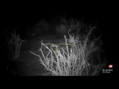 Ночная охота с Ночным прицелом на 300 метров