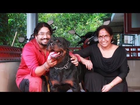 റോട്ടിനെ സ്നേഹിച്ച അമ്മയും  മകനും ❤❤ [ECO OWN MEDIA] Rottweiler dog lovers