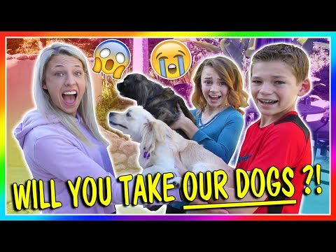 WILL YOU TAKE OUR DOGS?!?!   We Are The Davises