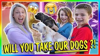 WILL YOU TAKE OUR DOGS?!?! | We Are The Davises