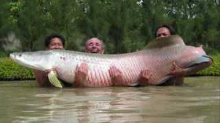 The Biggest Fish In The World