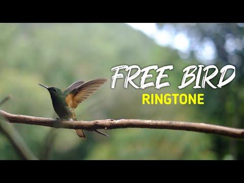 Best Nannare (Free Bird) Ringtone With Download Link | HEMANTH RINGTONES😍