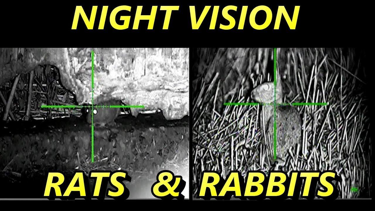 Rat shooting Air rifle hunting Pest control night vision ...