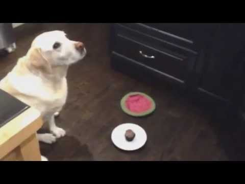 Thumbnail Dog Eats Birthday Cupcake In ONE Bite