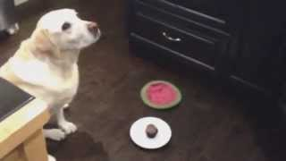 Max's Birthday Cupcake - Gone in One Bite