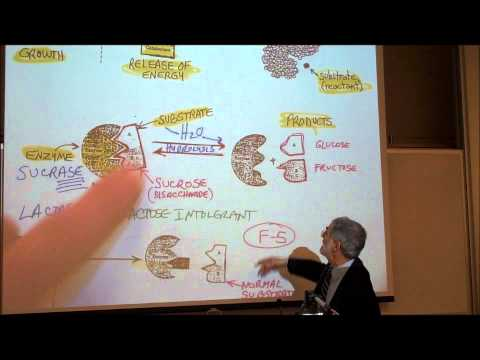 BIOLOGY; METABOLIC REACTIONS; PART 1; ENZYMES & COENZYMES by Professor Fink