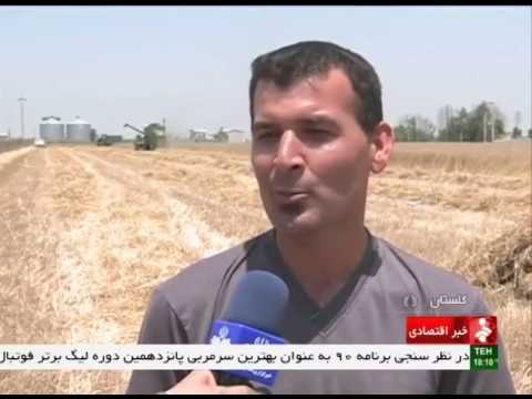 Iran Golestan province, Mechanized Wheat harvest برداشت مكانيزه گندم استان گلستان ايران